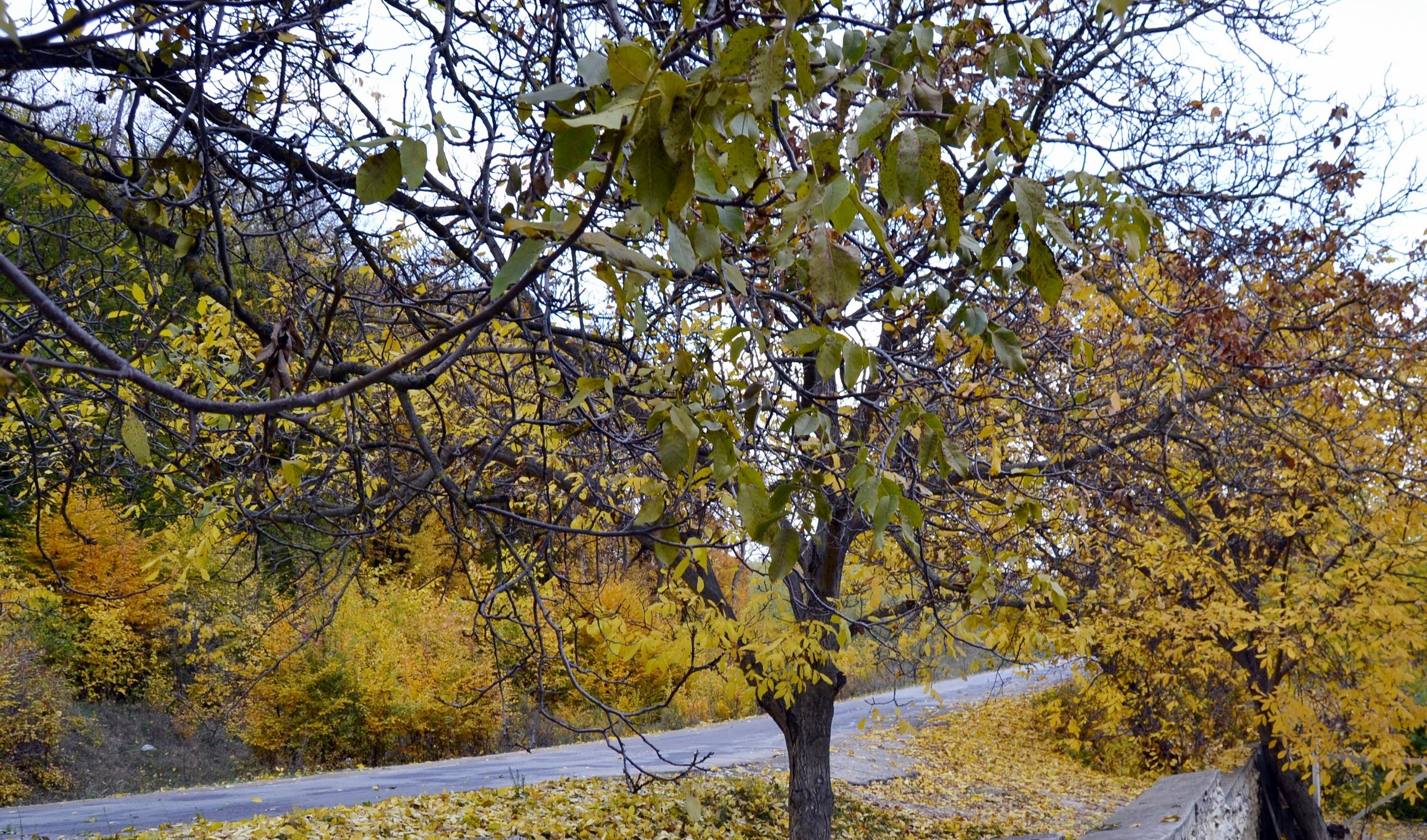 Lifestyle  Frumoasă-i toamna în Moldova, trist e dorul meu!